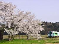 桜の駅を出発 佐藤和博
