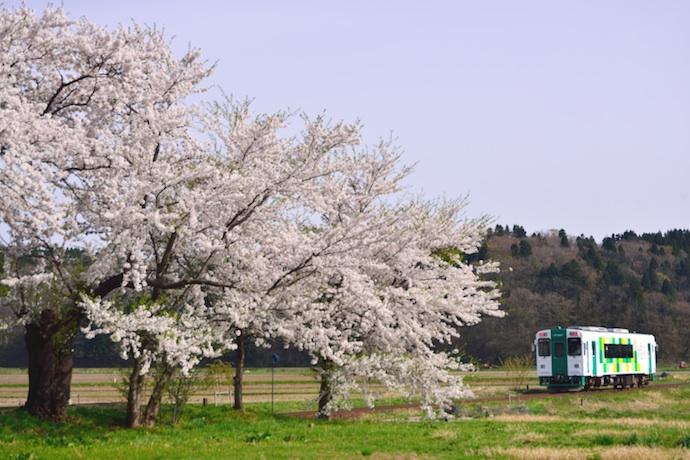 YR3001 桜の駅を出発 西滝沢 120429 佐藤和博w690