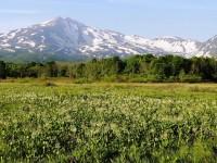 ミツガシワと鳥海山 (ヒナザクラ様撮影)